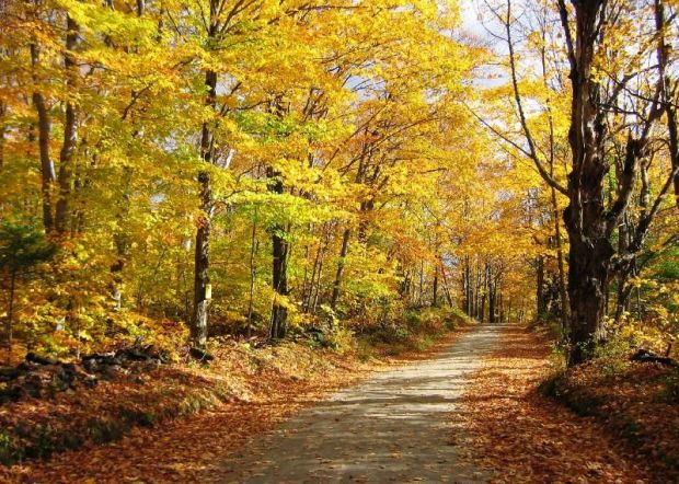 Image result for country lane
